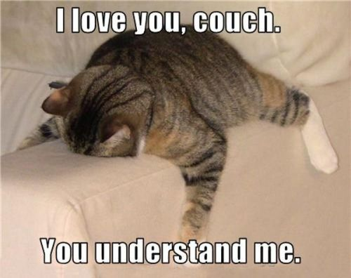 Couch Cat 2
