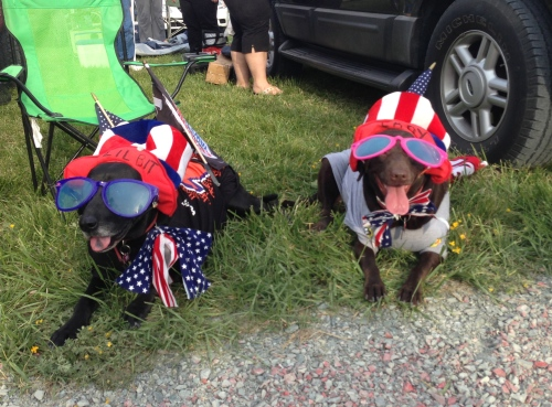 NASCAR dogs